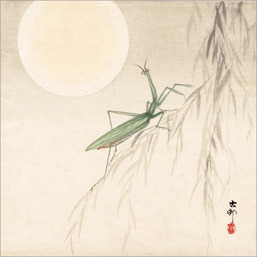 Wall sticker praying mantis on willow branch, a full moon above
