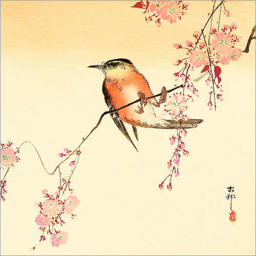 Wall sticker Red bird and cherry blossom