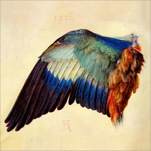 Wall sticker Wing of a blue roller
