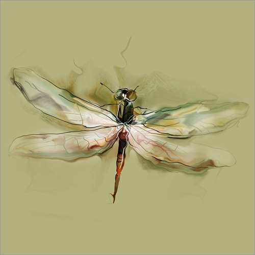 Wall Sticker Dragonfly in watercolor