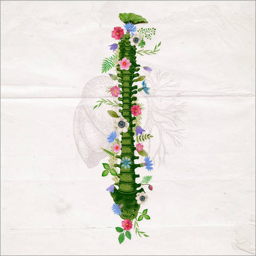 Wall sticker Floral Spine