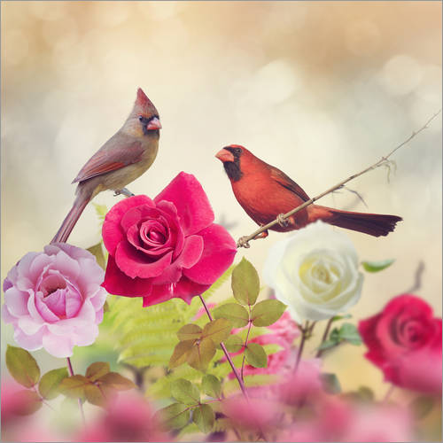 Wall sticker Roses and cardinals