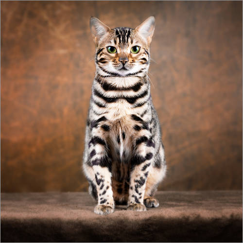 Wall sticker Proud Bengal cat