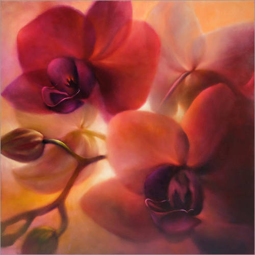 Wall sticker orchids