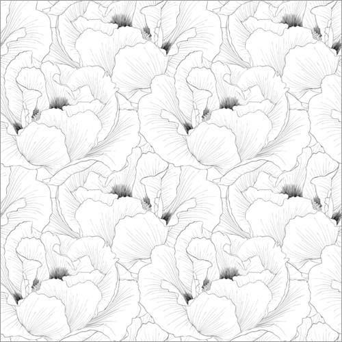 Colouring poster Delicate poppy flowers
