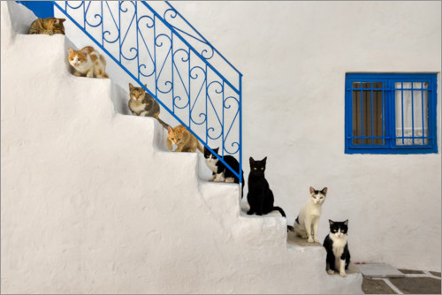 Premium poster Cats on stairs in Greece