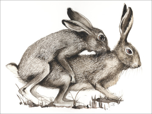 Premium poster Couples of Hares