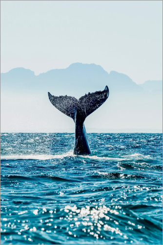 Premium poster Whale Tail - into the deep.