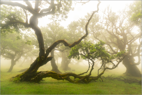 Premium poster Gnarled tree - fairytale forest