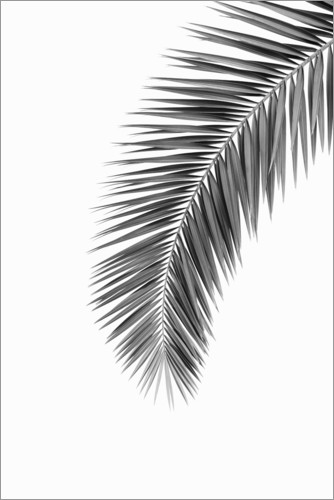Premium poster Palm Frond