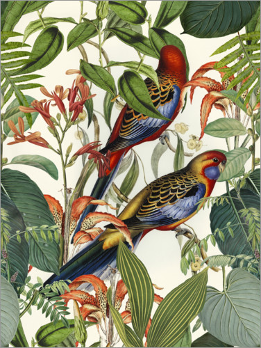 Premium poster Tropical Birds