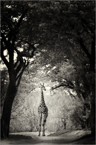 Premium poster Giraffe in the clearing