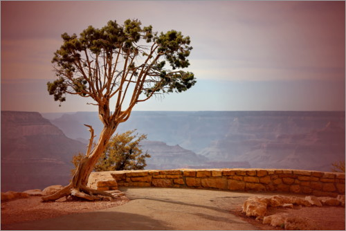 Premium poster Tree over the Grand Canyon