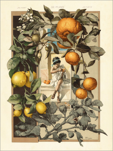 Premium poster Lemon and Orange Plant