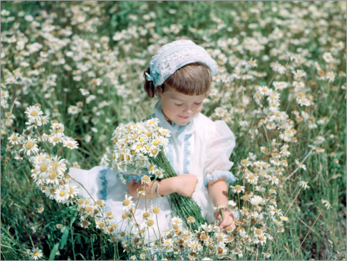 Premium poster Tiny girl in the daisy field