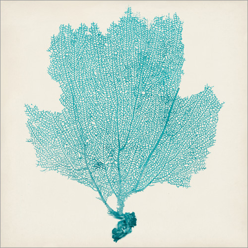 Wall sticker Sea fan turquoise