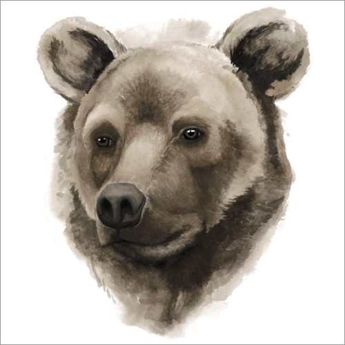 Wall sticker Grizzly portrait