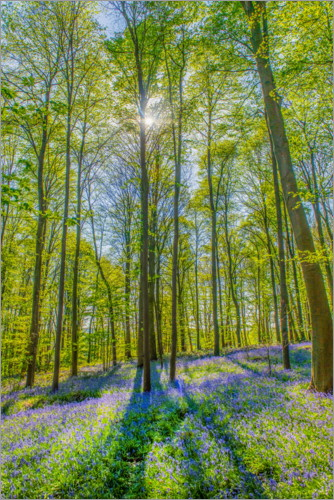 Premium poster Blue Flowers Forest III
