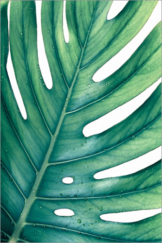 Premium poster Green Monstera