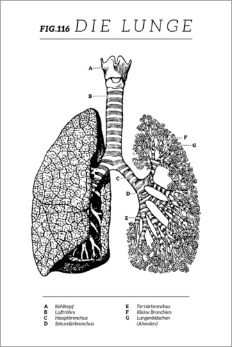 Premium poster Lungs Vintage Chart (German)