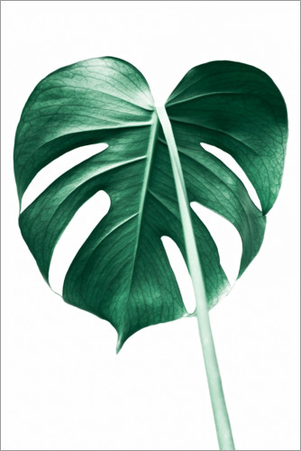 Premium poster Lonely Monstera