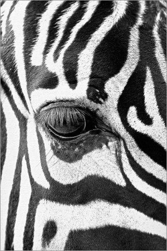 Premium poster Eye of the zebra