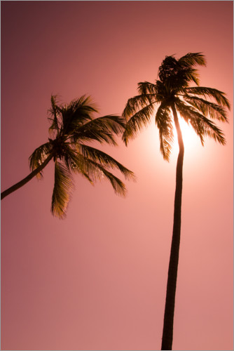 Premium poster Two palm trees