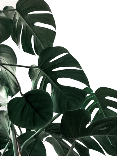 Premium poster In the shadow of the Monstera