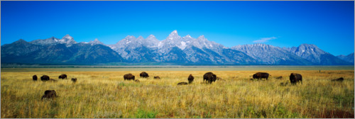 Premium poster Bison with mountains in the background