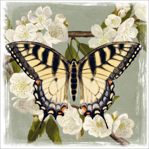 Premium poster Butterfly on a branch i