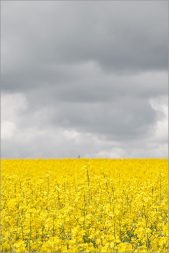 Premium poster Grey & YELLOW fields