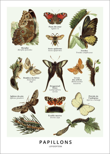 Premium poster Butterflies (french)