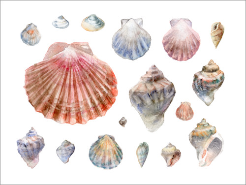 Premium poster Seashells Collection Watercolor