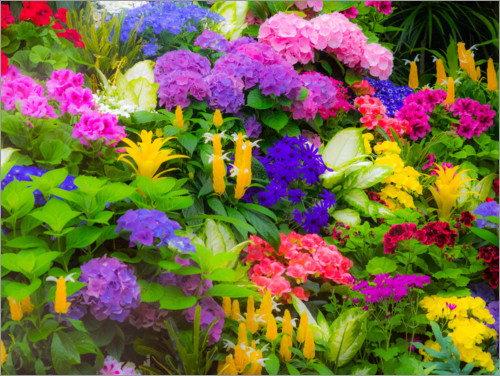Premium poster Colorful planting of flowers