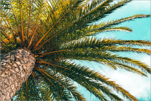 Premium poster Green palm leaves in front of a blue sky