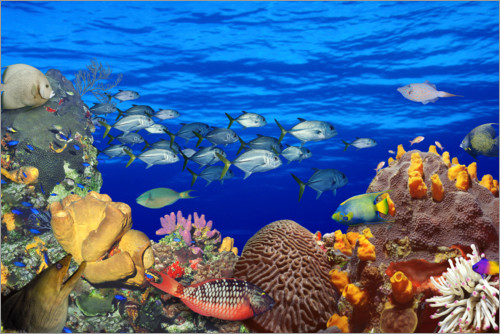 Premium poster School of fish on a reef