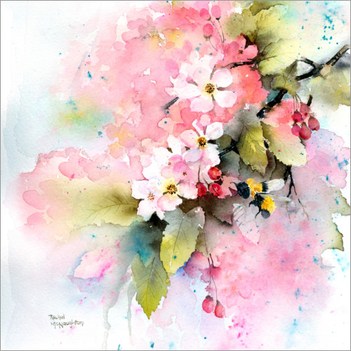 Premium poster Cherry blossoms with bee
