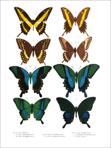 Premium poster Colourfulness of insects VI