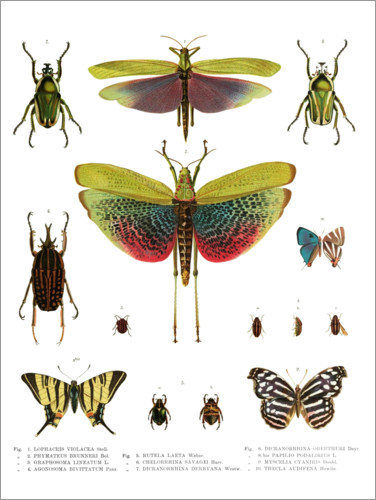 Premium poster Color splendor of insects I