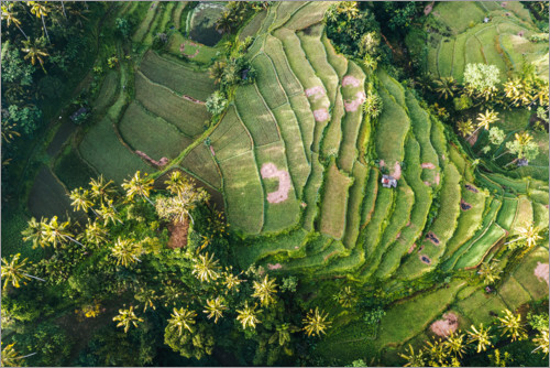 Premium poster Rice field from above, Bali