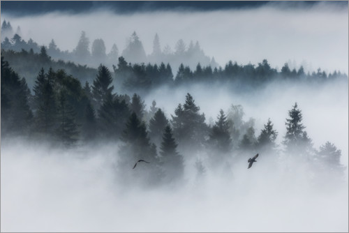 Premium poster Forest in the fog