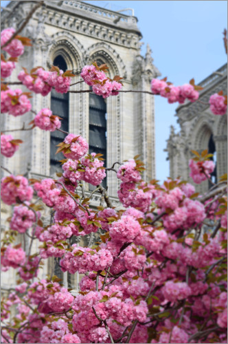 Premium poster Cherry blossoms in front of Notre Dame