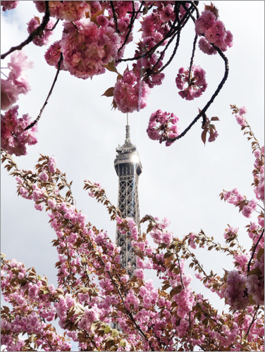 Premium poster Eiffel Tower top and cherry blossoms