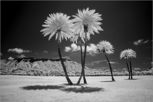 Premium poster Infrared palm trees