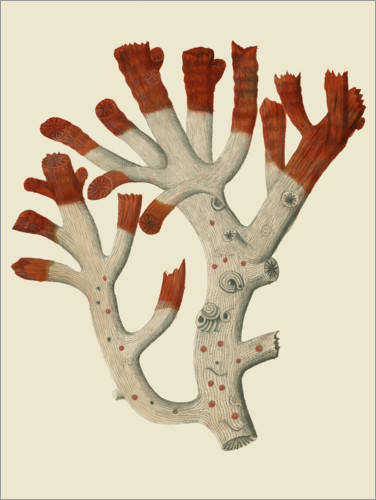 Premium poster Red coral I