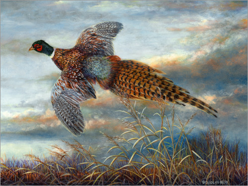 Premium poster Pheasant in flight