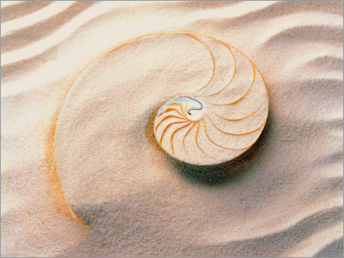 Premium poster Seashell in the sand