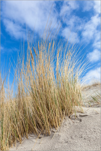 Premium poster Dunes and beach grass on the Baltic Sea
