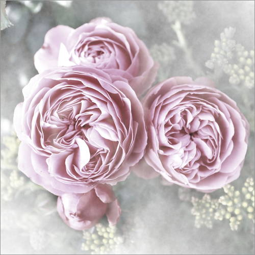 Wall sticker Roses in shabby style
