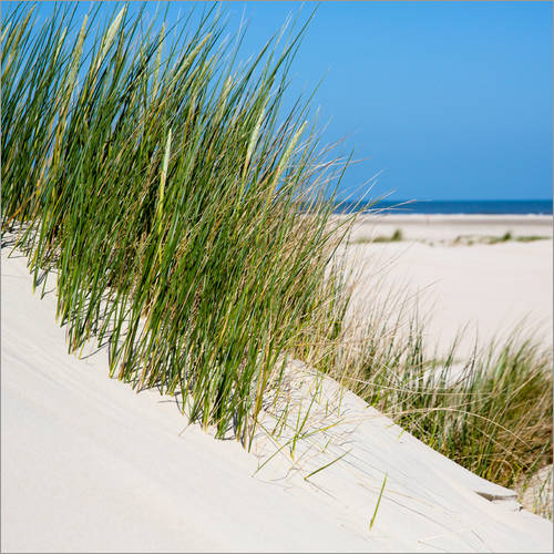 Wall sticker Dunes with grass at the coastline of the german island Norderney (Germany)